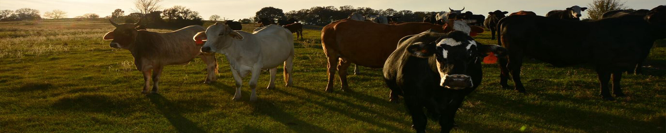 Farm Animals Custom