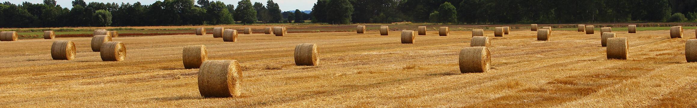 Farming Rural 01