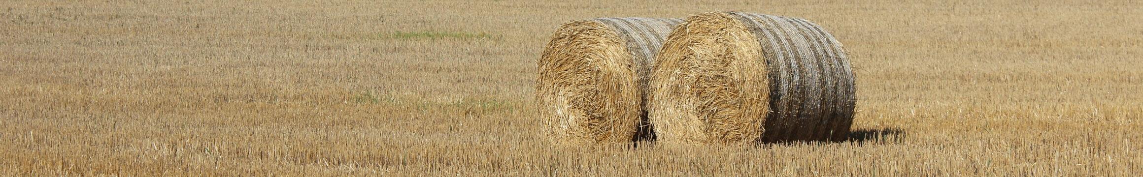 Farming Rural 03