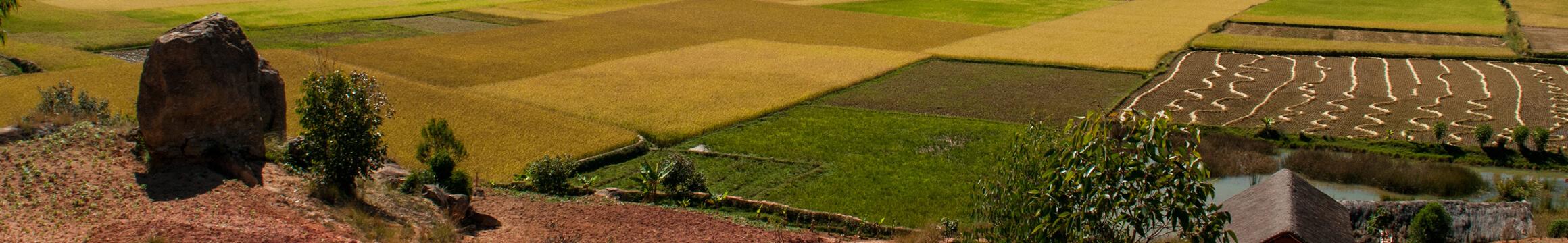Farming Rural 06