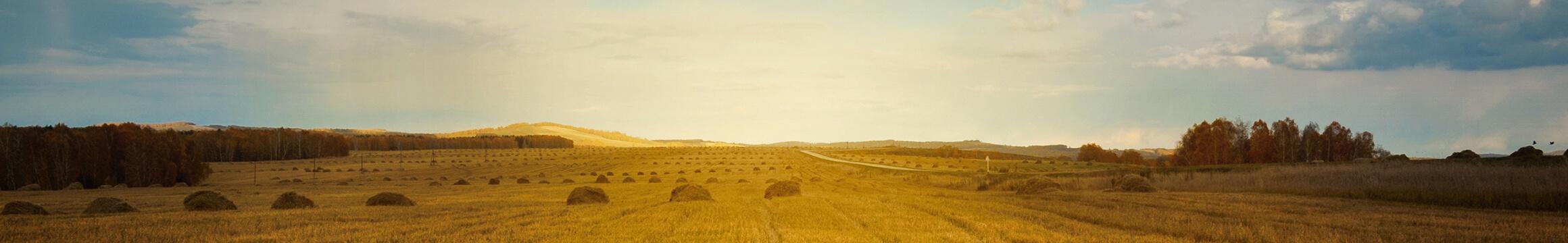 Farming Rural 21