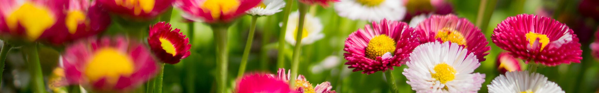 Floral 06