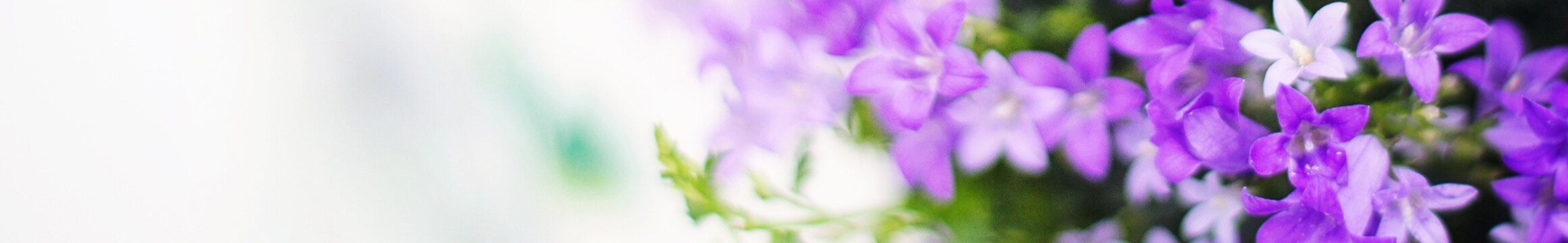Floral 22