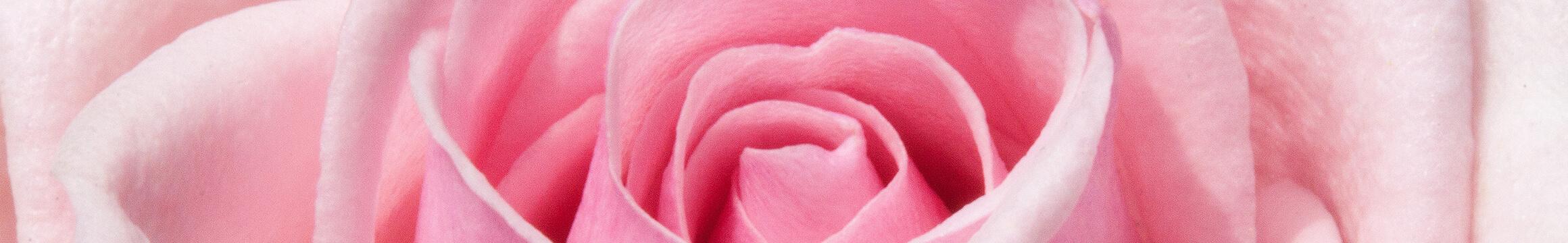 Floral 23