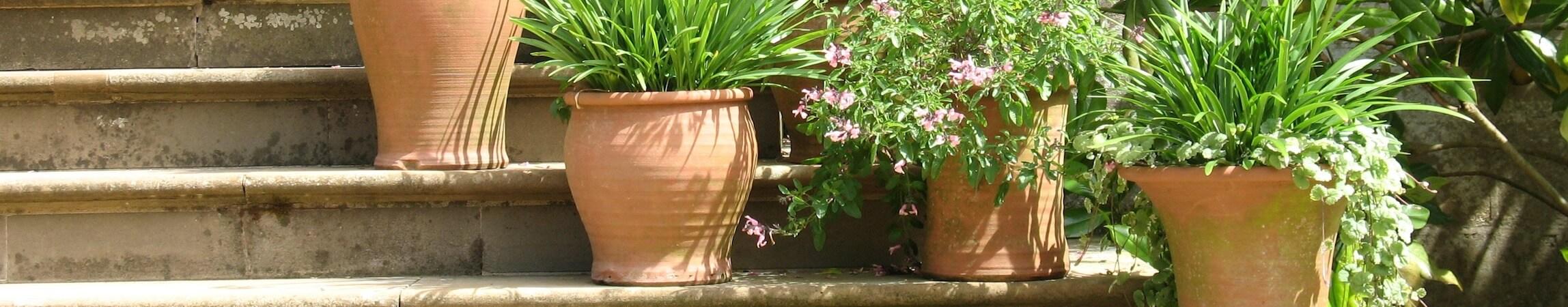 Gardening 11
