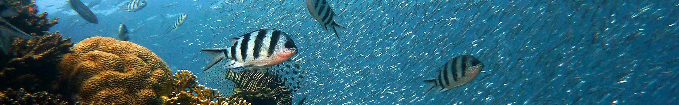 Scuba Oceanlife 03