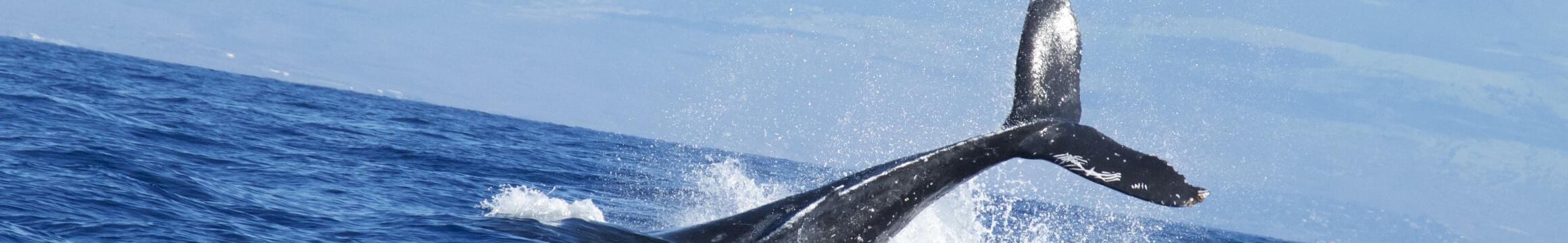 Scuba Oceanlife10