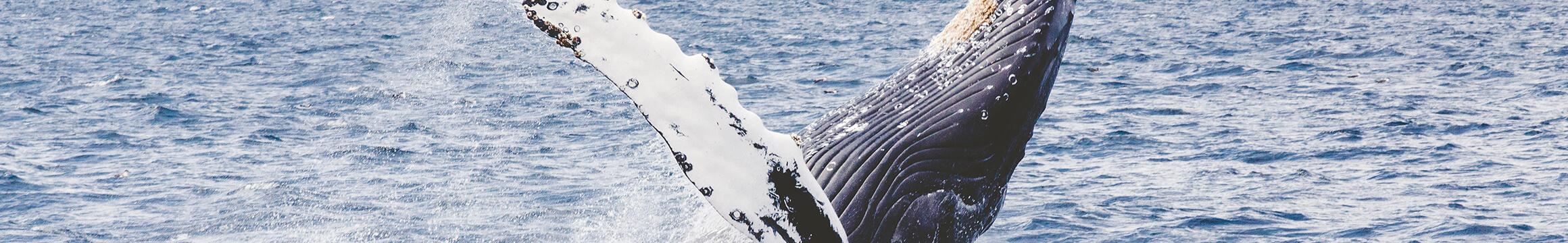 Scuba Oceanlife14