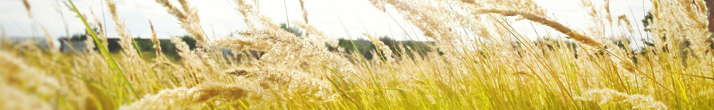 Rural 07