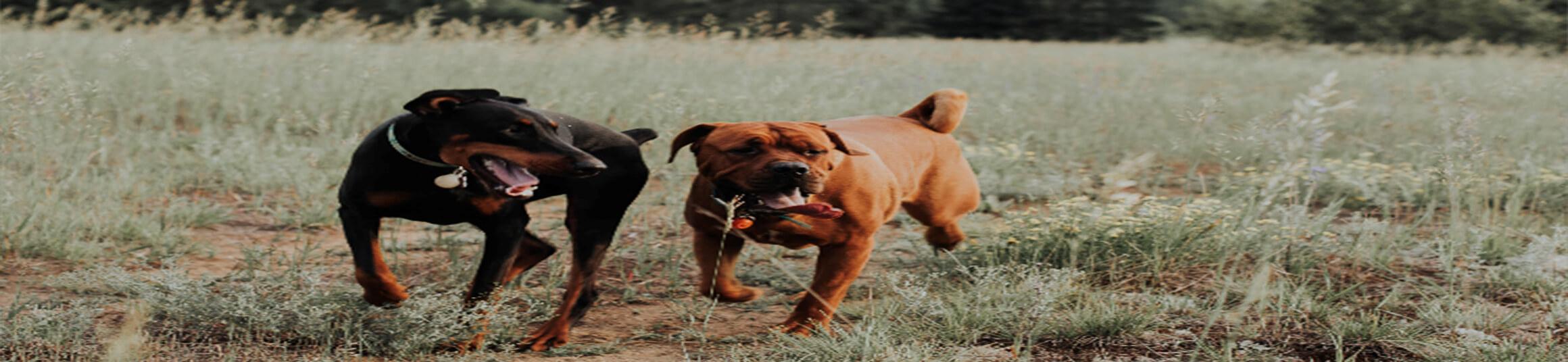 Custom Dogs Tubman