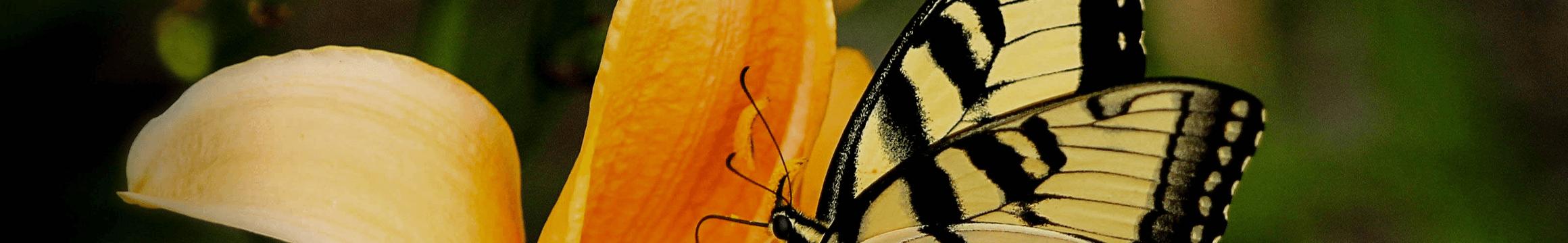 Yellow Orange Butterfly