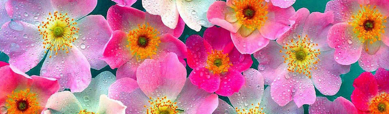 Flowers Website Header