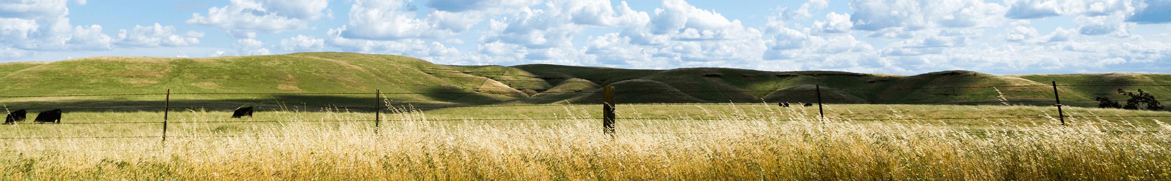 Rural-Clouds