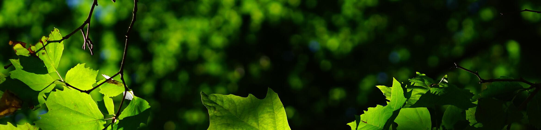 Leaves Ogden UT Cremations