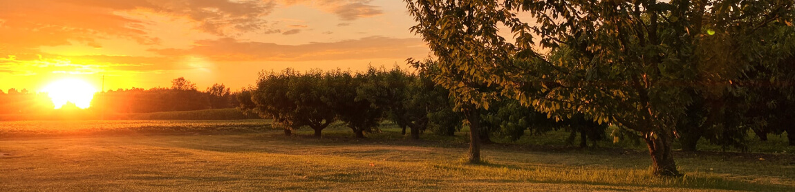 Orchard at sunset - what do I do at a celebration of life
