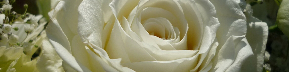 All Obituaries | Thomas McAfee Funeral Homes | Greenville SC funeral