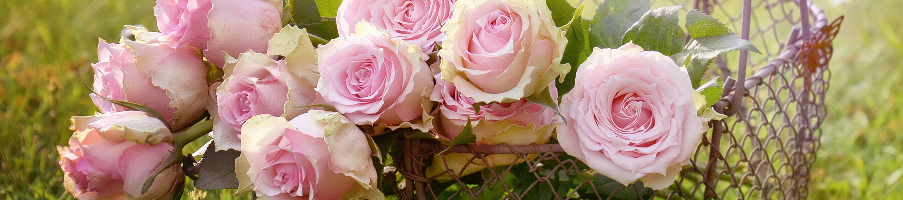 header image of pink roses