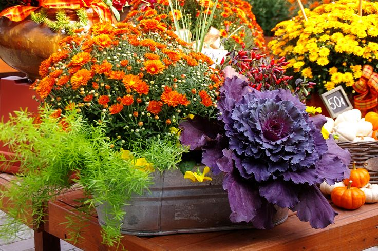 Good Fall Garden Ideas Part - 6: Fall Container Gardening Guide