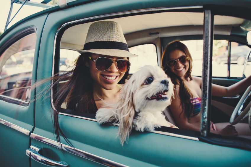 Top 50 Dog Friendly Road Trips