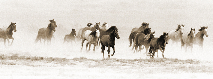 Free-Spirited Portraits of America's Persecuted Wild Horses Tell a Powerful Story