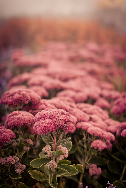 Flowers and moisture by Alexander Koste, on Flickr
