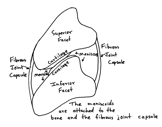 parts of the synovial membrane actually project deeper into the joint cavity and lie between the articulation surfaces of the joints. This deeper inner component of the synovial membrane is classically called the meniscus. With certain quick or unexpected motions, the meniscus can become entrapped between the joint surfaces, an experience that is extremely painful.