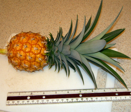 Pineapple with Ruler