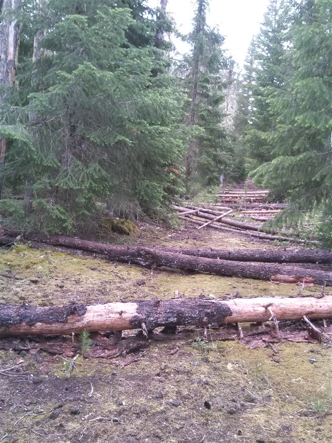 Volunteers cut and removed 180 logs from the Lava Lake route in the Big Springs snow park using cross-cut saws, silky folding saws and a chain saw. It took four trips to finish - what a difference!