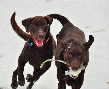 Bosco and Duncan are our boys and Ziva is our newest family member. Enjoy watching them have fun in these photos.