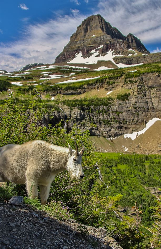 A special trip out west to Glacier National Park!