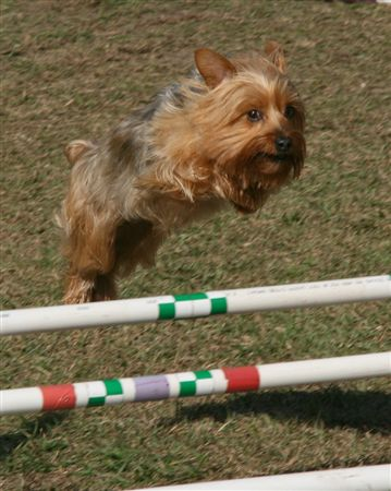 Agility dogs and their handlers at LCDA