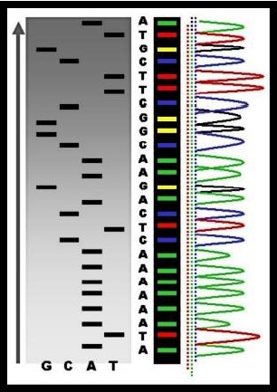 9/18/18 Sequencing Presentation
