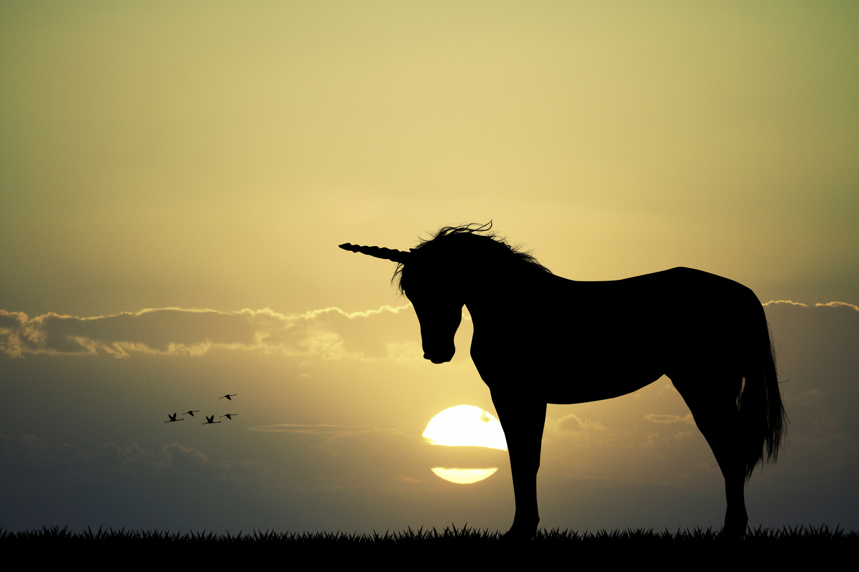 Find your own marketing unicorn today