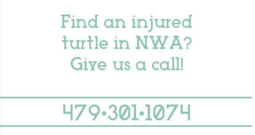 Turtle Shire Contact