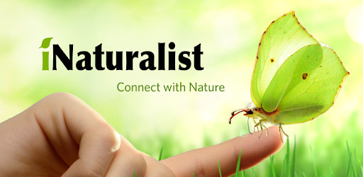 inaturalist_connect_467978034.png