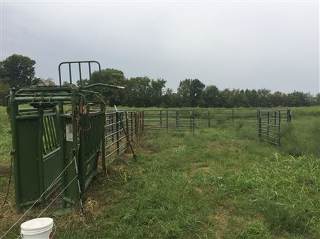 Photos of Economy Corral and Bud Box. Used with a gentle herd. Assess your conditions and choose appropriate equipment.
