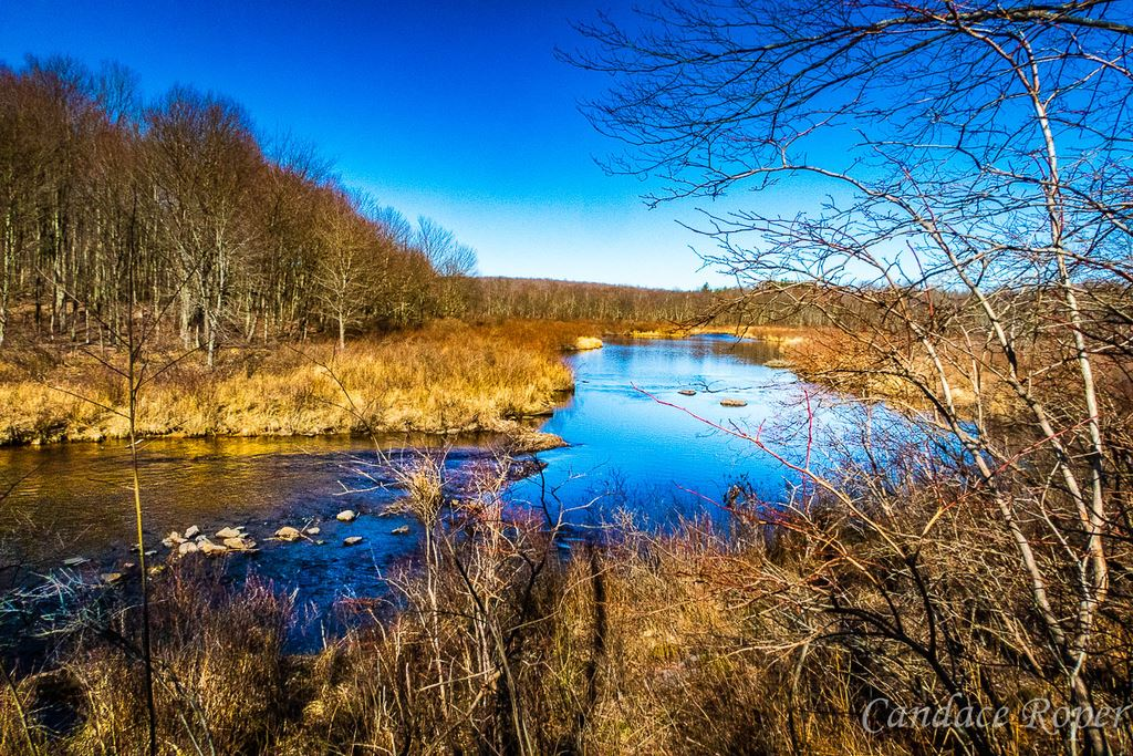 Hike into State Gamelands 127 to Tobyhanna Creek