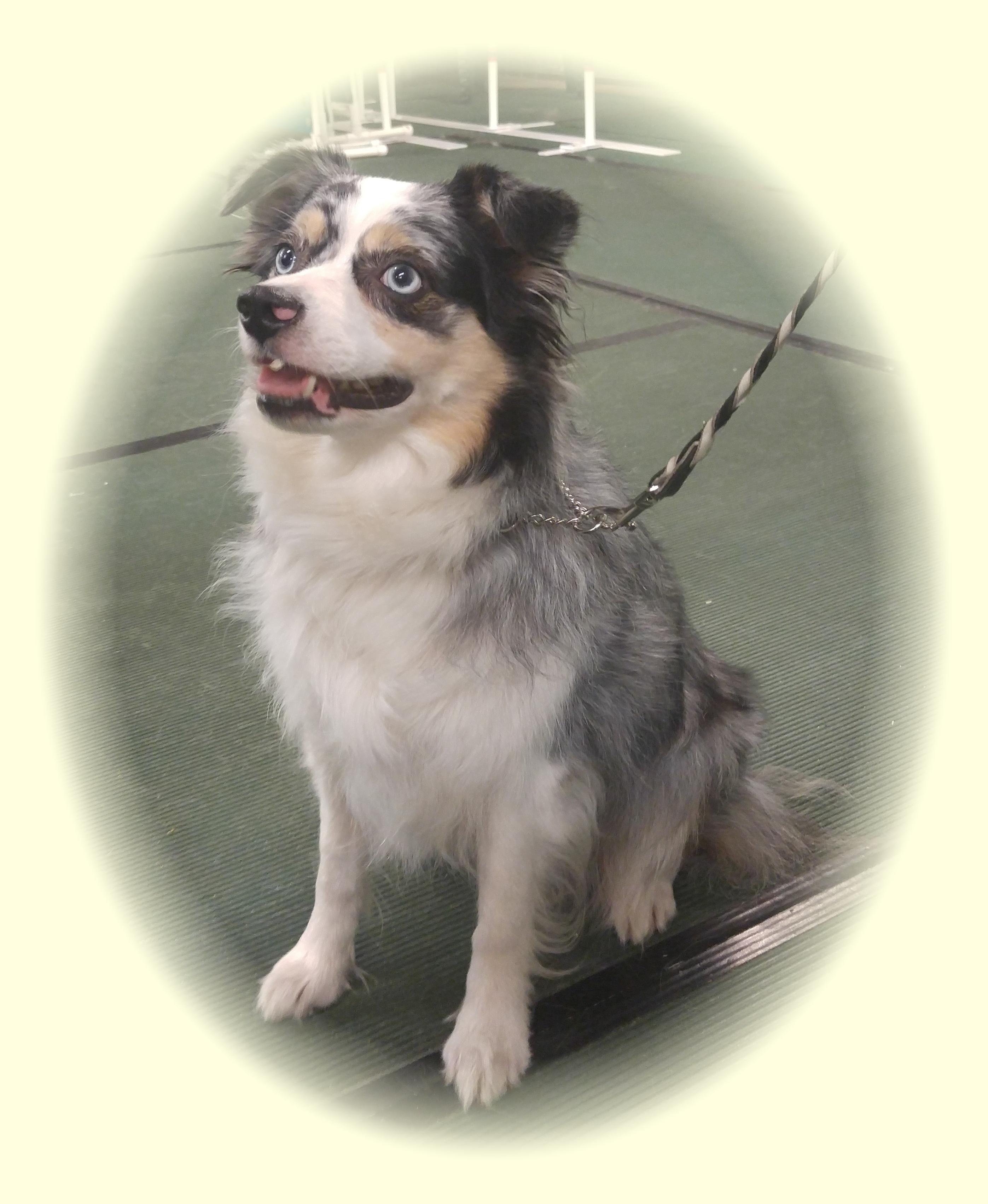 Class Info Brevard County Dog Training Club Inc