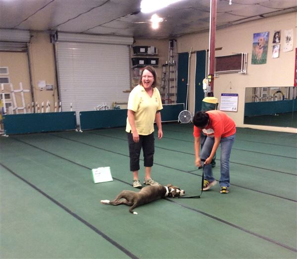 Rally class is a great way to get started in AKC obedience competition! Complete our prerequisite courses and join the fun!