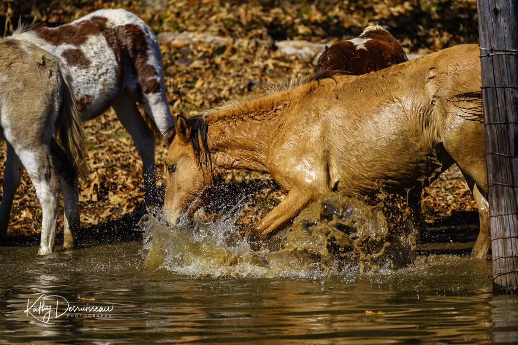 PHOTOG event in Antlers, OK, to photograph the Heritage Horses