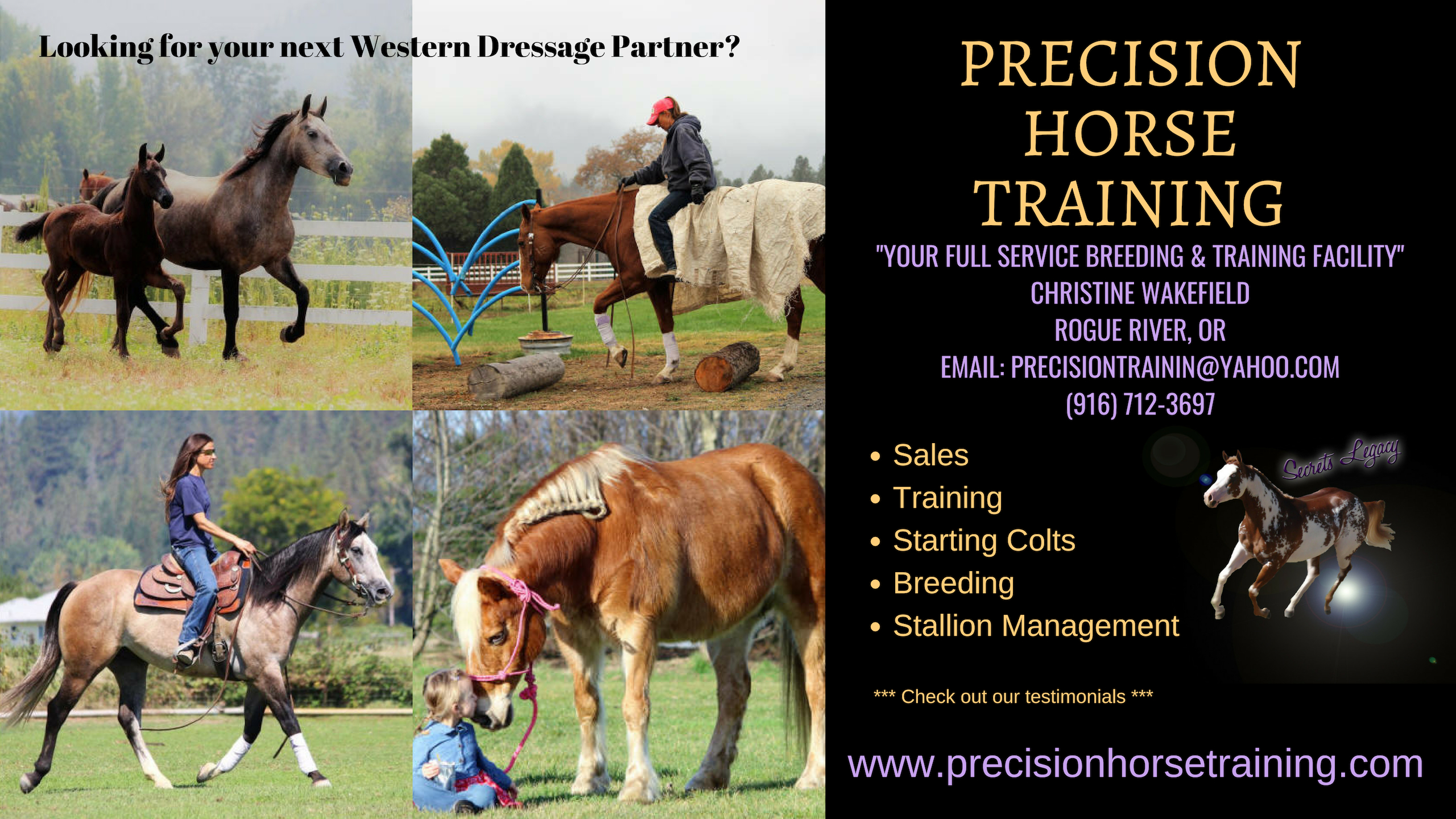 Precision Horse Training