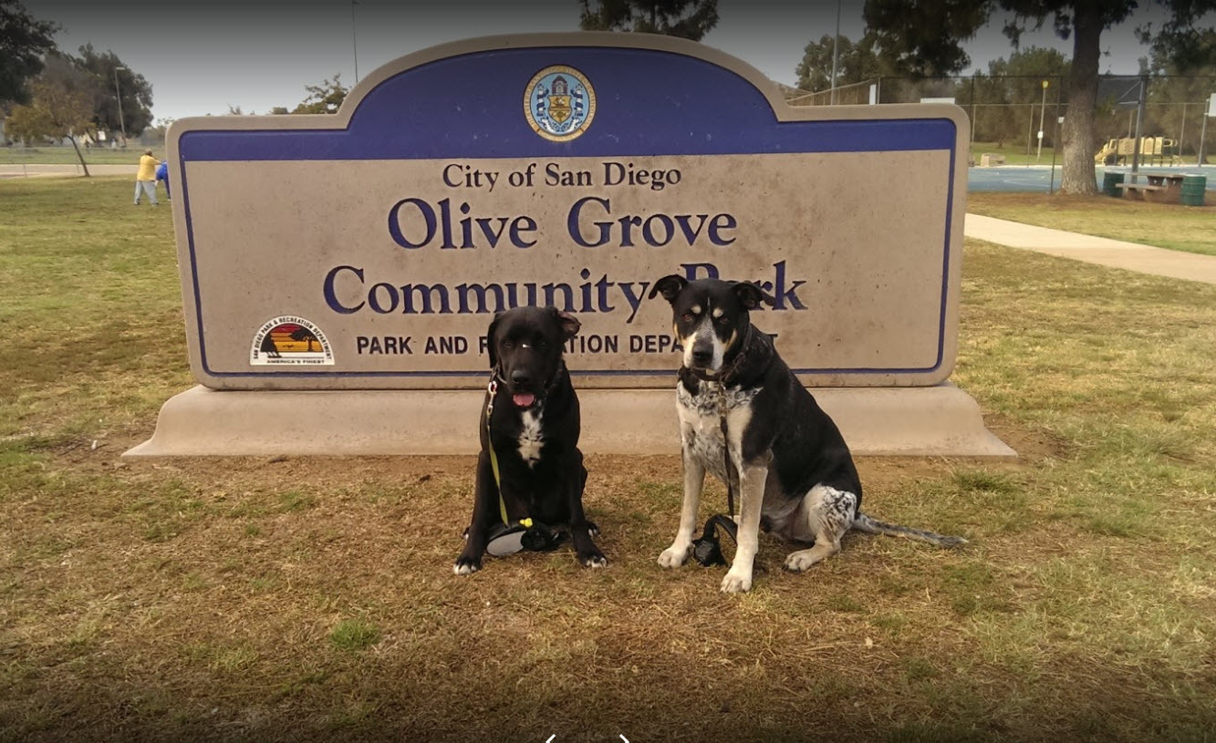 Olive Grove Park Dogs