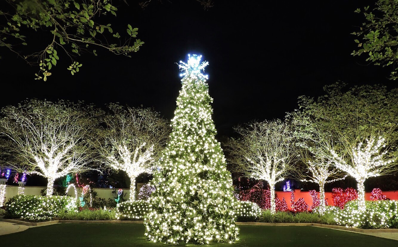Image of lighted tree in the Wedding Garden