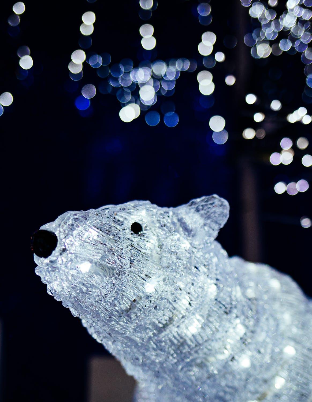 polar bear with lights