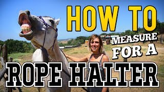 Using a Rope Halter on a Horse