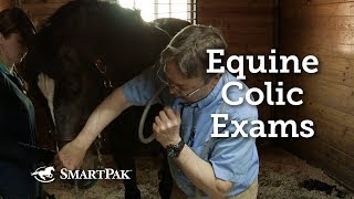 Colic in horses and treatment