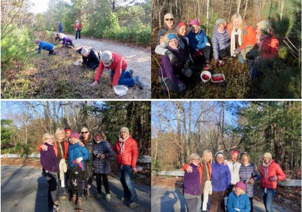 Suzanna Black led a this Nov 12 outing. Members picked their own cranberries then want for an interesting walk along the Squannacook River on a beautiful Mass Fish & Wildlife property.