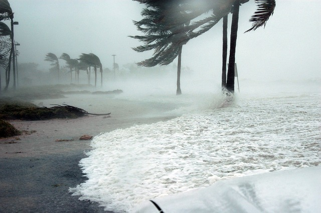 Trees Blowing on the Shoreline in a Hurricane