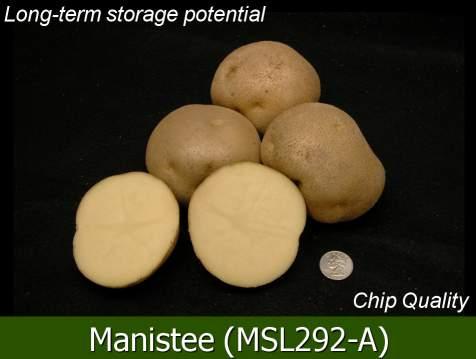 Manistee Potato Variety