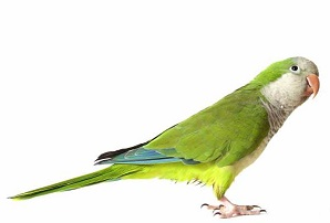 Home - Northwest Exotic Bird Society